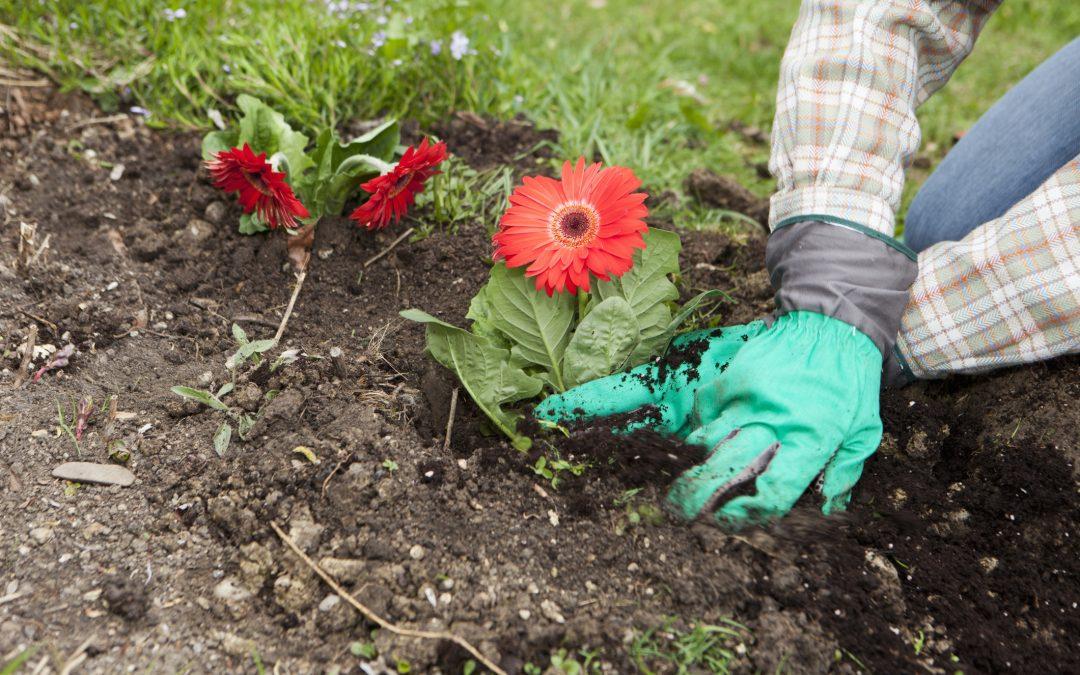 5 Tips for Springtime Planting in South Carolina