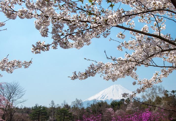 3 Tips for Planting Flowering Trees